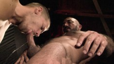 Gay bear gets a great blowjob then licks ass before he hammers it